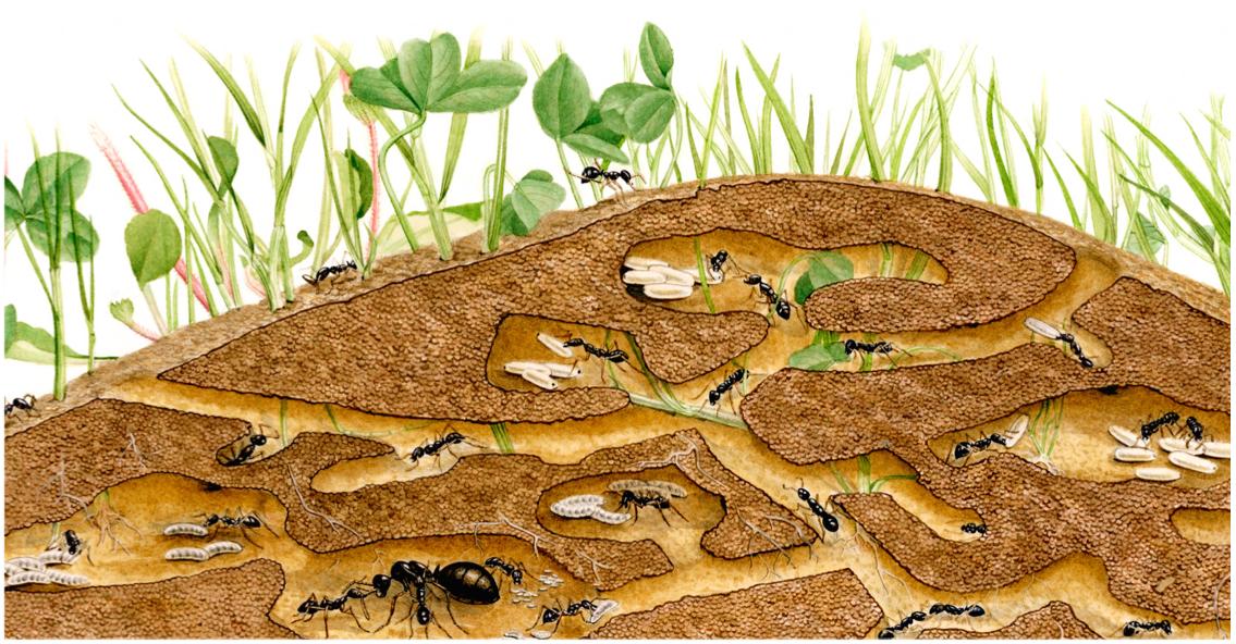 Resultado de imagem para vida subterranea das formigas